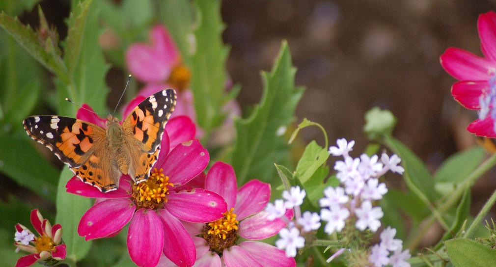 Schmetterling (Bild: © Umweltministerium Baden-Württemberg)
