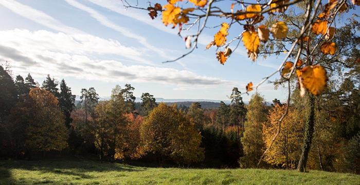 Ein Mischwald (Foto: © ForstBW)